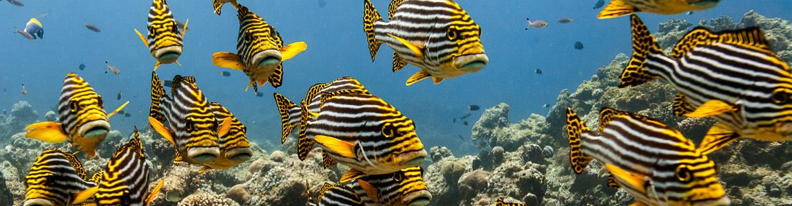 Did you know there is a fish called, SWEETLIPS ?
